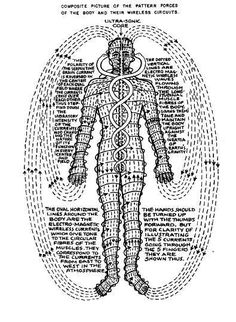 Torus energy fields In the human body