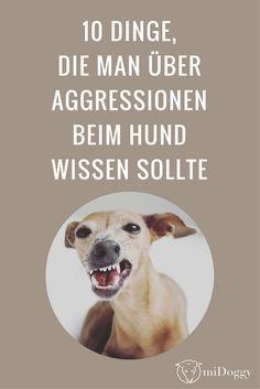 10 Dinge, die Du über Aggressionen beim Hund wissen solltest.
