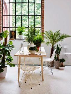 #lightfull #fresh #lovewhite #cosy #plants