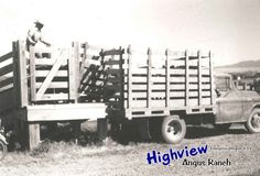 Dave loading cattle in 1971 Farm Trucks, Old Trucks, Cattle Corrals, Cowboy Quotes, Cattle Drive, Dairy Cattle, Farm Fun, Side Board, Horse Trailers