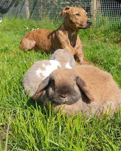 Sun's out Buns out 🐰🐶☀️ The weather is lovely and warm, and a perfect time to be out and about with our animals. Hot weather can be very dangerous for our animals, so it's very important to make sure that your pets have access to cool shaded areas, and have fresh water available at all times. Suns Out, Buns, Fresh Water, Your Pet, Weather, Warm, Times, Cool Stuff, Hot