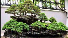 Image result for penjing garden