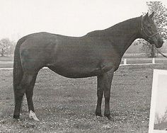 Sweet Tooth 1965 sire & dam: On-and-On & Plum Cake - Broodmare for Raise A Native (4 times), Seattle Slew and Riva Ridge - Alydar's dam (great great grand sire: American Flag)