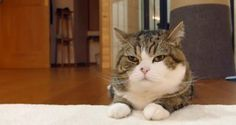 箱大好きなネコさん!でもちゃんと入ってるの?・・・安心してください入ってますよ!