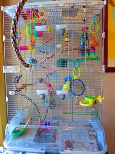 Nice looking budgie cage setup. (Forum with pictures to give a lot of ideas about how to setup a cage. Budgie Toys, Budgie Parakeet, Parrot Toys, Parakeets, Parrots, Budgies Care, Diy Parakeet Cage, Parakeet Care