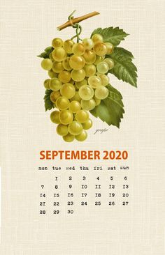 Botanical Fruit 2020 Calendar Printable Templates culinary Fruits Monthly Planner In botany Aggregate fruit Ovary Latest Designs 12 Months Yearly One Page Free Printable Calendar Templates, Printable Calendar 2020, Monthly Calendar Template, Print Calendar, 2019 Calendar, Calendar Design, Free Printables, Vintage Calendar, Calendar Wallpaper