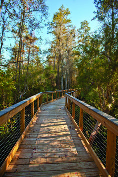 Conservation Park Boardwalk in PCB / Mother of Fall Trips