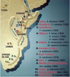Carte d' ancien homo habilis et homo erectus(-3 000 000/-130 000 ) au Pléistocène