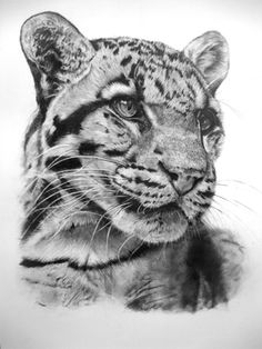 Clouded Leopard 04-11 by Dhekalia.deviantart.com on @deviantART All graphite on A3 smooth Bristol Board  Pencil Grades 4H - 4B