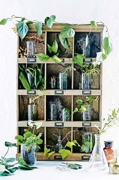 10 unforgettable ideas for styling indoor plants. Production by Marissa…