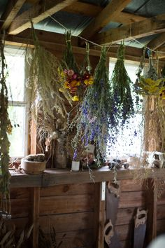 Drying flowers in a garden shed.