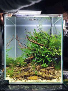 Aquarium Landscape, Nature Aquarium, Home Aquarium, Aquarium Design, Tanked Aquariums, Fish Aquariums, Aquascaping, Aquarium Fish Tank, Gardens