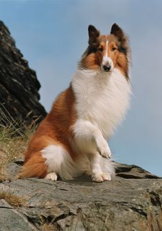 Lassie! Always looked forward to the raising of the paw at the end of the show !