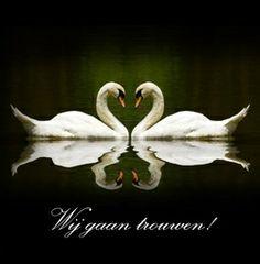 Twee witte zwanen in hartvorm op zwart. Romantische trouwkaarten voor de mooiste dag van je leven! http://www.trouwpost.nl/trouwkaarten/romantisch