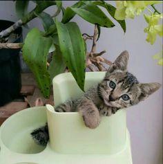 My kitten on my orchid