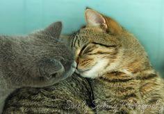 Kittens nose to nose5X7 art print kittens by simplyseekingphotos, $15.00