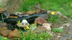 goldfish ponds kansas city