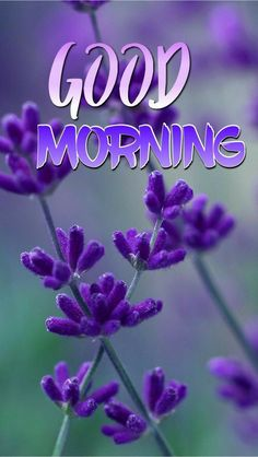 Good Morning Saturday Images, Good Morning Dear Friend, Good Morning Beautiful Pictures, Good Morning Images Flowers, Good Morning Roses, Good Morning Cards, Good Morning Texts, Morning Pictures, Sunday Images