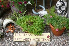 Texas Terrain, a desert landscape, with cactus, succulents and potted plants.