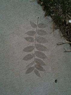 Leaf imprint on concrete sidewalk.