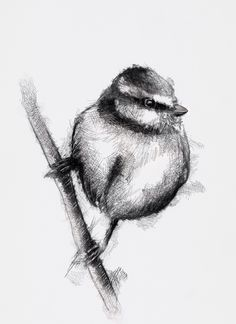 One of my sketch a day drawings Blue tit  #art #bird #bluetit #drawing #sketch