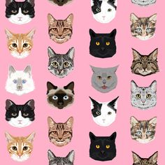 cat faces cute cats fabric sweet cats blush girls kittens siamese cat lady fabric fabric by petfriendly on Spoonflower - custom fabric Siamese Cats, Cats And Kittens, Kitty Cats, Big Cats, Cat Fabric, Pink Cat, Cat Face, Dog Names, Spoonflower