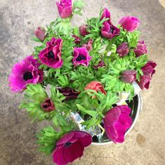 Cerise Anemones! sold in bunches of 20 stems from the Flowermonger the wholesale floral home delivery service.