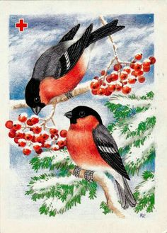 Christmas Bird, Christmas Drawing, Vintage Christmas Cards, New Year Illustration, Christmas Illustration, Beaded Flowers Patterns, Wine And Canvas, Animal Graphic, Winter Painting