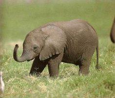 Newborn Baby Elephant   Lovely Adorable Cutie Pies – Baby Elephant