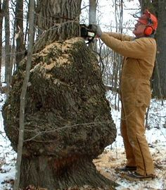 """One of my greatest joys is """"bagging the big burl."""" It has the joy of the hunt to it, because the really good burls are quite rare, and you need to have permission to harvest the tree when you do fi. Wood Turning Projects, Wood Projects, Woodworking Projects, Woodworking Plans, Tree Burl, Oak Tree, Amboyna Burl, Vintage Rosen, Wooden Clock"""