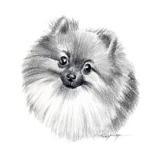 POMERANIAN Dog Pencil Drawing ART Print Signed by by k9artgallery,