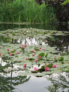 Monet's water garden..fabulous!