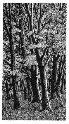 Tall Trees - Sue Scullard, wood engraving -block print- b & w Carve from the light side of the trees. Art And Illustration, Illustrations, Linocut Prints, Art Prints, Block Prints, Land Art, Scratchboard, Black White Art, Wood Engraving