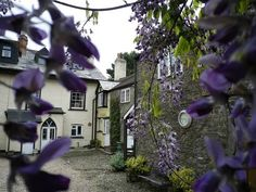 A glimpse of our courtyard and holiday cottages taken through the wisteria. West Down House, Bradworthy, Holsworthy, North Devon, England #Earth #Beautiful #Landscape http://on.fb.me/12ZUnog