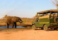 Afrika-Reise: Jeep-Safari oder Safari mit Minibus?