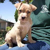 Lathrop Ca Cocker Spaniel Meet Oscar A Dog For Adoption With