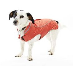 New Buster Raincoats!The BUSTER raincoat is made of a special material which is both water resistant and  windproof, but at the same time breathable and durable.  Available in store in XXSmall, XSmall, Small and Medium sizes, with larger sizes to order.