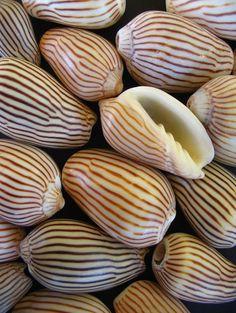 Seaside Style ~shells