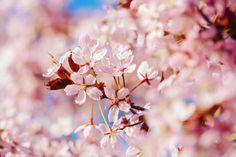 Joining the feed of season. Canon Photography, Nature Photography, Beautiful Day, Cherry Blossom, Finland, Parks, Seasons, Instagram, Seasons Of The Year