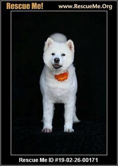 591 Best All Sams All the Time images in 2019 | Samoyed