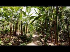 No Correr das Águas: Agroflorestas - Episódio 4 - YouTube