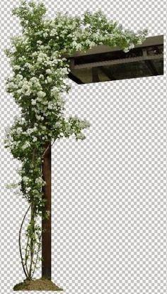 Plants png landscapes 61 Ideas for 2019 Photoshop Design, Tree Photoshop, Photoshop Rendering, Photoshop Images, Photoshop Elements, Photoshop Tutorial, Photo Backgrounds, Background Images, Landscape Architecture