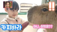 일본동물농장 - 카피바라 당근먹이기~~!