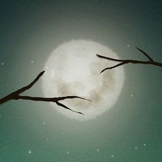 """ b u l a n ""  .  .  .  .  .  #hililio  #illustration  #illustrator  #childrenillustration  #childrenillustrator  #drawing  #artwork  #digitaldrawing  #fairytale  #bestillustration  #photoshop  #illustgram  #moon"