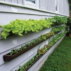 vertical gardening, gutter garden