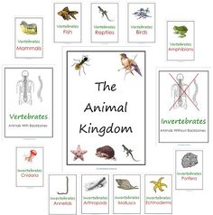 Free Animal Kingdom Notebook Printables