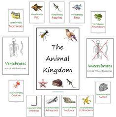 Free Animal Kingdom Notebook Printables