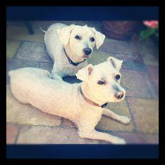 Mijn lieve doggies in heaven
