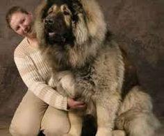 """Résultat de recherche d'images pour """"chien de race"""""""