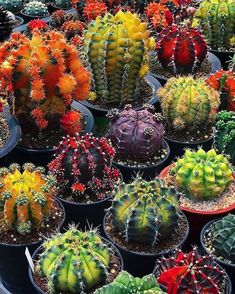 Vertical Garden Plants, Succulent Gardening, Cacti And Succulents, Planting Succulents, Home Garden Plants, Planting Flowers, Exotic Plants, Exotic Flowers, Beautiful Flowers